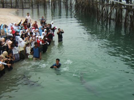 Asyik ya melihat dan mengabadikan ikan-ikan Dolphin yang jinak, ayat qauniyah kata ustaz Asep koordinator majelis taklim PT Panasonic,