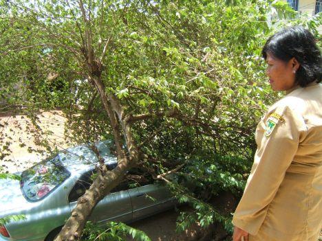 Alahi..... mobil di timpah pohon renung si Ibu Guru