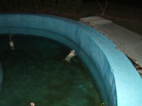 kolam ini tidak berisi seekor ikan pun, entah apa penyebab si kucing melompat, mungkin mengejar tikus.