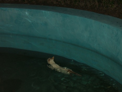 berenang kian kemari mencari pertolongan