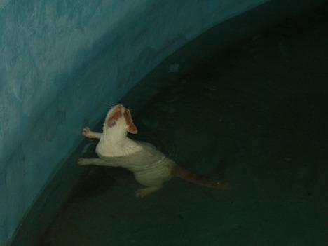meong ..........meong............ meong tolong lah aku, hemmmm mengapa kolam ini tak berpinggir ya?
